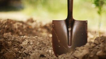 17-totally-free-gardening-tips17