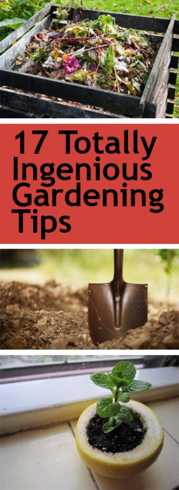 Gardening, Gardening Tips, Gardening Hacks, Easy Gardening TIps, Popular Pin, Vegetable Gardening, Gardening for Beginners, Beginner Gardening Tips, Beginner Gardening Hacks