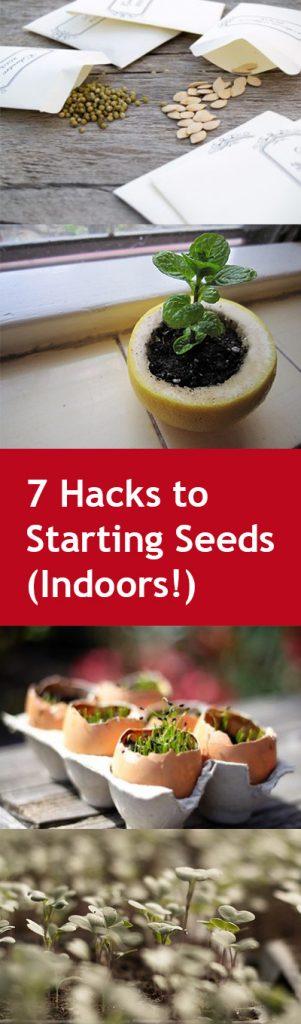 pin-7-hacks-to-starting-seeds-indoors
