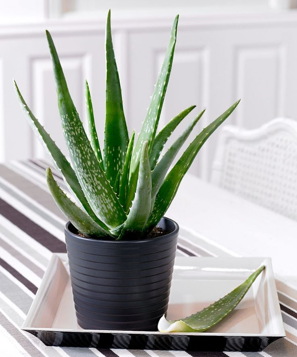 10-house-plants-that-will-purify-the-air-in-your-home