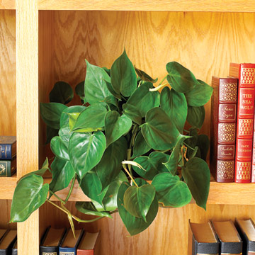 10-house-plants-that-will-purify-the-air-in-your-home5