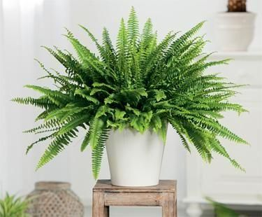 10-house-plants-that-will-purify-the-air-in-your-home7