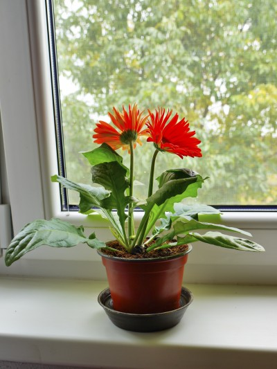 10-house-plants-that-will-purify-the-air-in-your-home8
