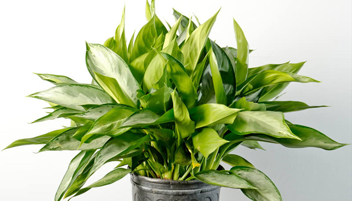 10-house-plants-that-will-purify-the-air-in-your-home9