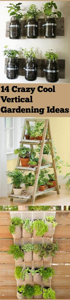 Vertical Gardening, Vertical Gardening Ideas, Easy Vertical Gardening Hacks, Gardening 101, Gardening Tips and Tricks, Gardening Hacks, Popular Pin, Vertical Gardening Tips and Tricks.