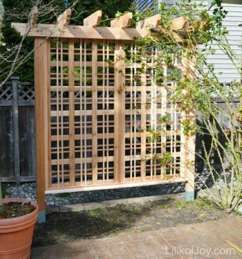 14-crazy-cool-vertical-gardening-ideas11