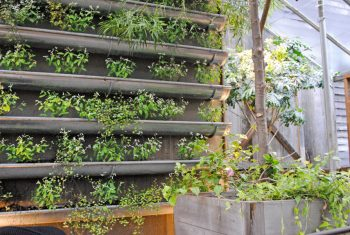 14-crazy-cool-vertical-gardening-ideas12