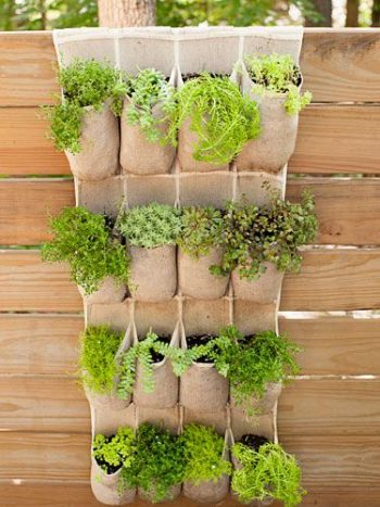 14-crazy-cool-vertical-gardening-ideas4