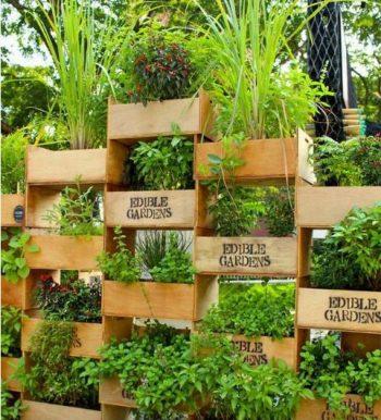 14-crazy-cool-vertical-gardening-ideas5