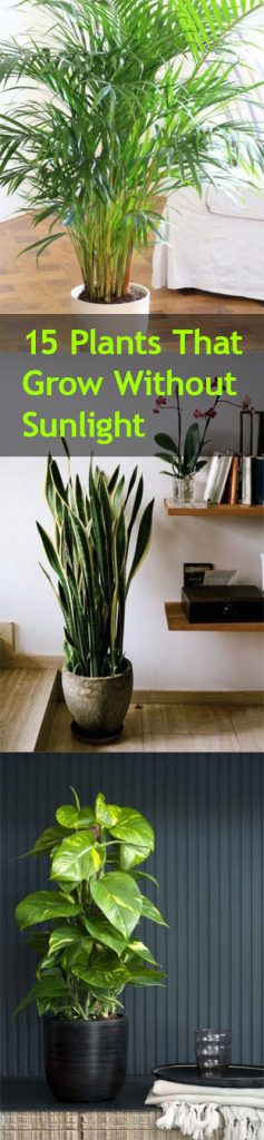 Plants That Grow Without Sunlight Low Friendly Gardening