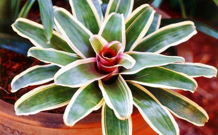 15-plants-that-grow-without-sunlight