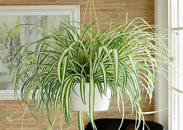 15-plants-that-grow-without-sunlight13
