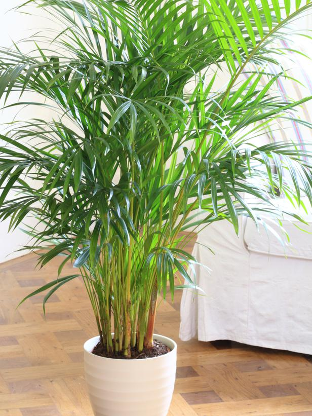 15-plants-that-grow-without-sunlight5