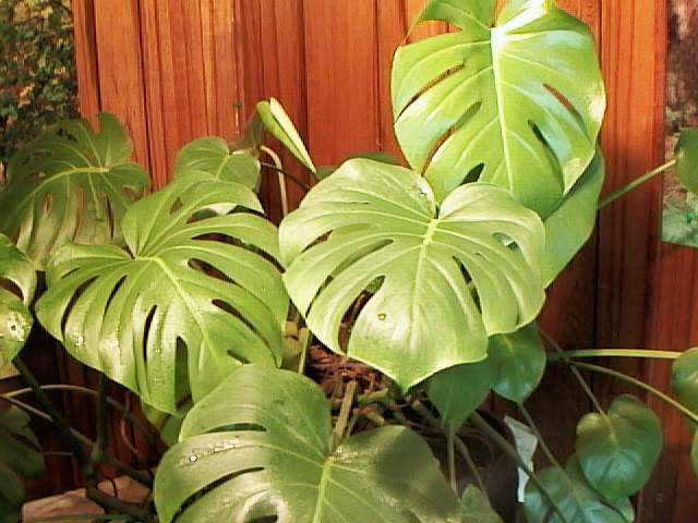 15-plants-that-grow-without-sunlight6