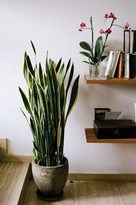 15-plants-that-grow-without-sunlight7