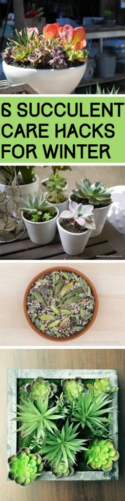 Winter Hacks, Succulent Care Hacks, Caring For Succulents In Winter, How to Care For Succulents, How to Care For Succulents in Winter, Popular Pin