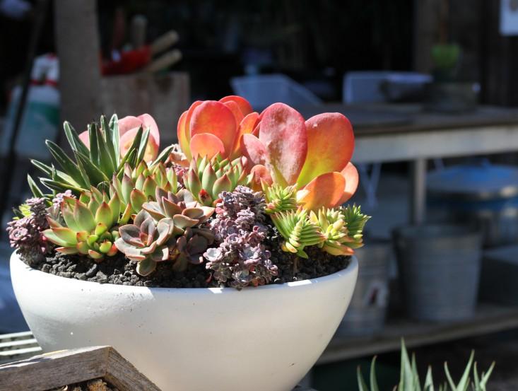 6-succulent-care-hacks-for-winter