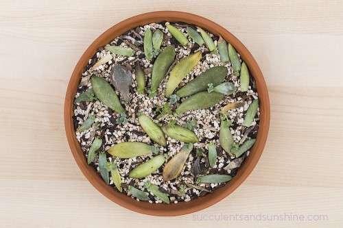 6-succulent-care-hacks-for-winter2
