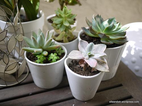 6-succulent-care-hacks-for-winter3