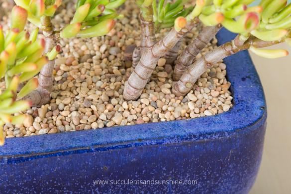 6-succulent-care-hacks-for-winter4