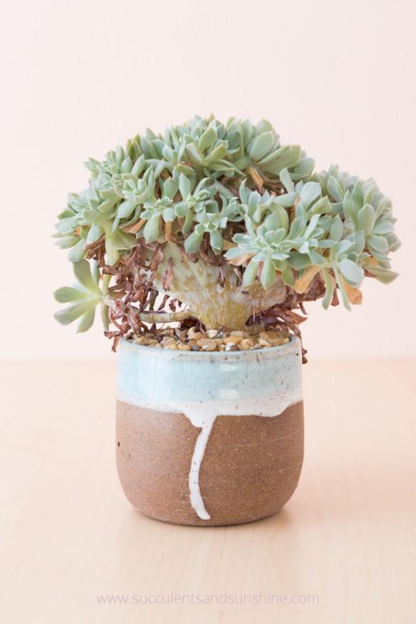 6-succulent-care-hacks-for-winter5