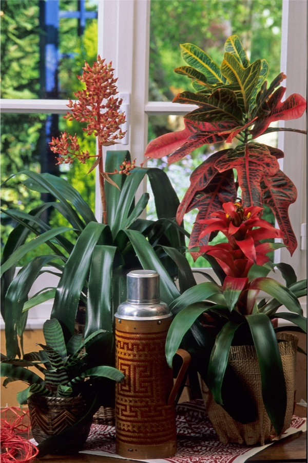Bromeliads Grow Without Sunlight