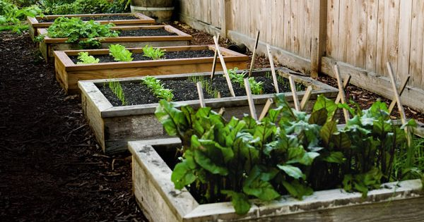 20 DIY Gardening Projects Perfect For Spring