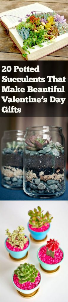 Potted Succulents, Succulents, How to Grow Sucuclents, Garden Containers, DIY Garden, DIY Garden Containers, Valentines Day Presents, Valentines Day, Valentines Day Gifts for Her, Easy Valentines Day Gifts, Gifts for Gardeners.