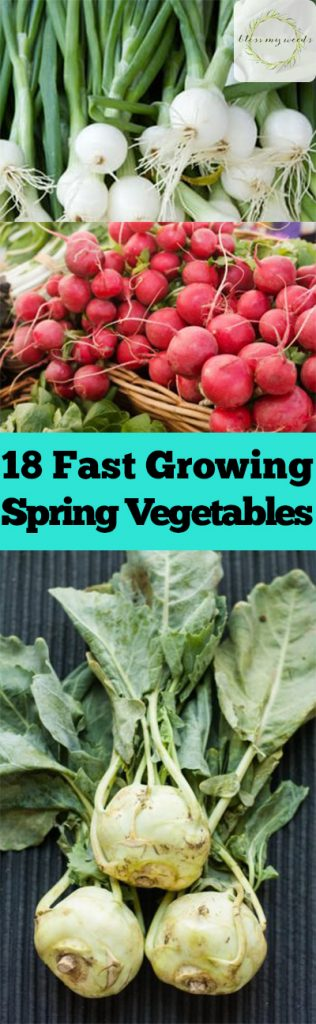 Spring Vegetables, Vegetables to Grow In the Spring, Easy Growing Vegetables, Fast Growing Vegetables, Vegetables for Spring, Vegetables Perfect for Spring, Spring Gardening, Spring Gardening Tips and Tricks, Popular Pin
