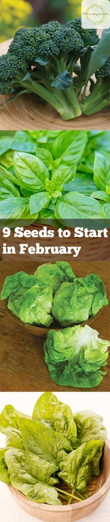Seeds to Start in February, February Gardening, Spring Gardening, Early Spring Gardening, Vegetables to Grow in Late Winter, Vegetables to Grow in Early Spring, Early Spring Gardening, Gardening 101, Gardening Tips and Tricks, Gardening, Gardening Hacks, Popular Pin