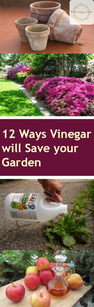 Using vinegar in the garden
