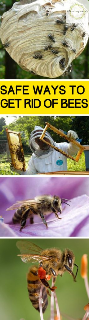 Safe Ways to Get Rid of Bees ~ Bless My Weeds