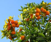 How to Prune Fruit Trees, Fruit Trees, How to Grow Fruit Trees, Growing Fruit Trees, Fruit and Vegetable Gardening, Gardening 101, Gardening TIps and Tricks, Gardening Hacks, Pruning Fruit Trees Tips, Popular