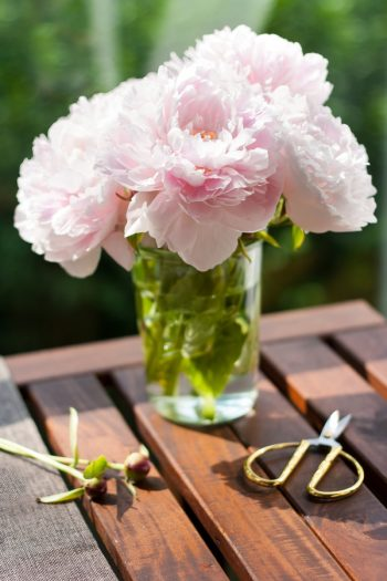 Do you know how to garden with vinegar? Vinegar will save your garden, and it's simple to use! See the tricks you never knew vinegar could do. Vinegar can even help extend the life of your flowers.