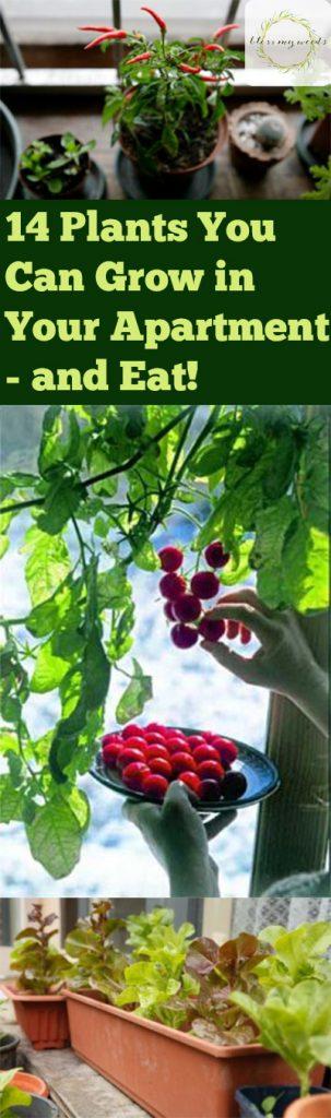Easy to grow vegetables, Indoor Gardening, Growing Vegetables Indoors, Indoor Gardening Tips and Tricks, Easy to Grow Indoor Vegetables, Vegetable Gardening, Vegetable Gardening TIps and Tricks, Popular Gardening Pin, Gardening, Gardening TIps