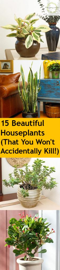 House Plants, House Plants, How to Care for House Plants, House Plant Care Tips, Tips and Tricks, Indoor Gardening, Gardening Hacks, Indoor Gardening Care, How to Care For Indoor Gardens, Popular