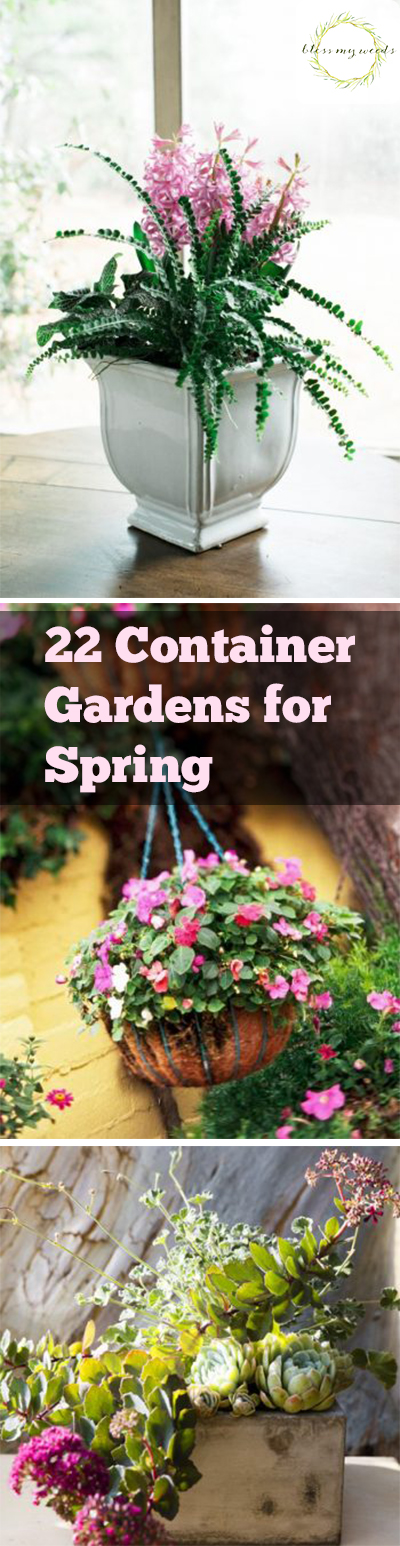 22 Container Gardens for Spring. Spring Gardening, Spring Gardening Tips and Tricks, Container Gardening for Spring, Spring Container Gardening, Container Gardening Ideas, Container Gardening Tips and Tricks, Gardening, Popular Gardening Pins, Easy Container Gardening
