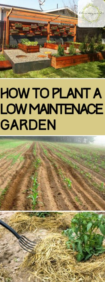 Garden, Gardening, Low Maintenance Garden, Gardening Hacks, Gardening 101, Easy Gardening, Low Maintenance Gardening Hacks, How to Grow a Low Maintenance Garden.