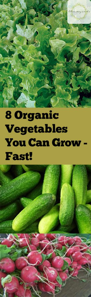 Organic Gardening Tips, Organic Gardening for Beginners, How to Start Organic Gardening, How to Grow Organic Vegetables, Vegetable Growing Tips, How to Grow Organic Vegetables, Popular Gardening Pin