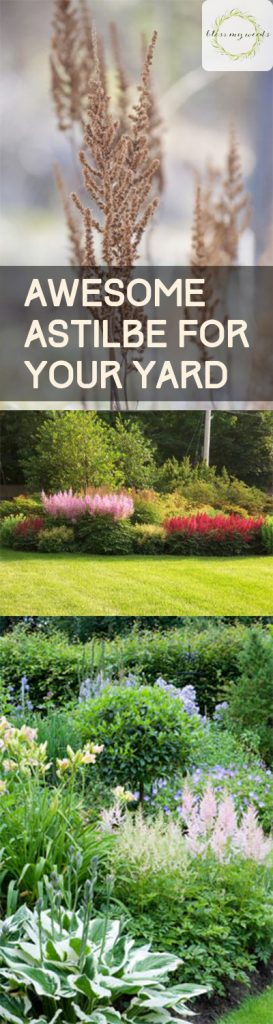 Awesome Astilbe for Your Yard | Yard Tips, Yard and Landscaping, Astilbe for Your Yard, How to Grow Astilbe, Gardening, Gardening Tips and Tricks, Pretty Shrubs for Your Landscape, Landscaping Tips for Beginners, Popular Gardening Pin