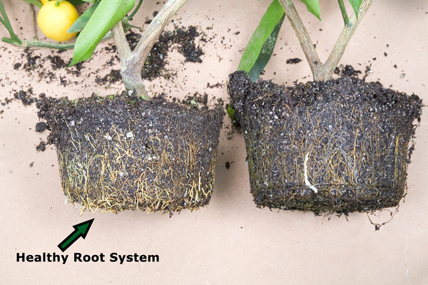 Time to get rooted 7 things you need to know about your plants 39 roots page 7 of 9 bless my - Seven tricks for healthier potted plants ...