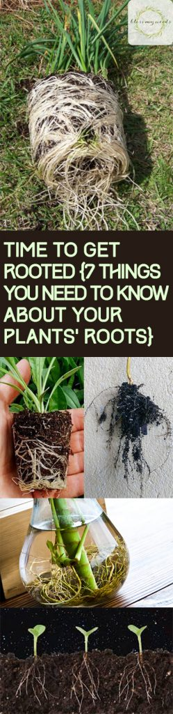 Plant Roots, Things You Should Know About Your Plants Root System, Care Tips for Plant Roots, How to Keep Your Plants Healthy, Tips and Tricks for Gardening, Gardening Tips and Tricks, Gardening Care Tips, Gardening Care Hacks, Popular Pin