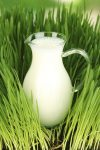 Gardening, Gardening With Milk, How to Use Milk In Your Garden, Using Milk In Your Garden, Gardening, Gardening 101, Gardening, Gardening Hacks, Uses for Milk, Things to Do With Expired Milk, Gardening, Natural Garden Fertilizer.