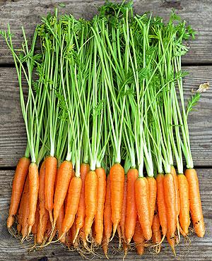 Organic Gardening Tips, Organic Gardening for Beginners, How to Start Organic Gardening, How to Grow Organic Vegetables, Vegetable Growing Tips, How to Grow Organic Vegetables, Popular Gardening Pin