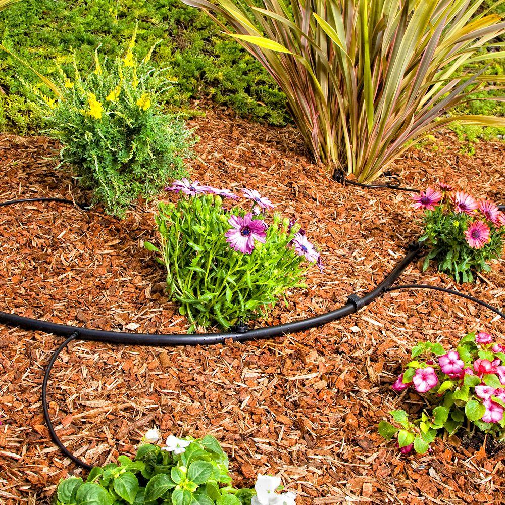Garden Pest Control, Pest Control Tips and Tricks, Pest Control Hacks, Natural Pest Control, How to Control Garden Pests, Natural Ways to Control Garden Pests, Gardening, Gardening Hacks, Gardening Tips and Tricks, Popular Pin