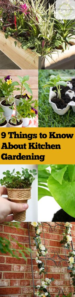 9 Things to Know About Kitchen Gardening| Kitchen Garden, Kitchen Gardening, Gardening Hacks, Gardening 101, Garden In Your Kitchen, Indoor Gardening, Indoor Gardening Tips and Tricks, Indoor Gardening Hacks, Gardening Hacks, Garden 101, Popular Pin