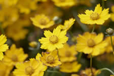 Perennials That Pack a Punch| Perennials, Easy to Grow Perennials, How to Grow Perennials, Growing Perennials, Gardening, Gardening Tips and Tricks, Gardening Hacks, Flower Gardening, Flower Gardening Tips and Tricks
