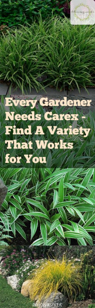 Every Gardener Needs Carex Find A Variety That Works For You