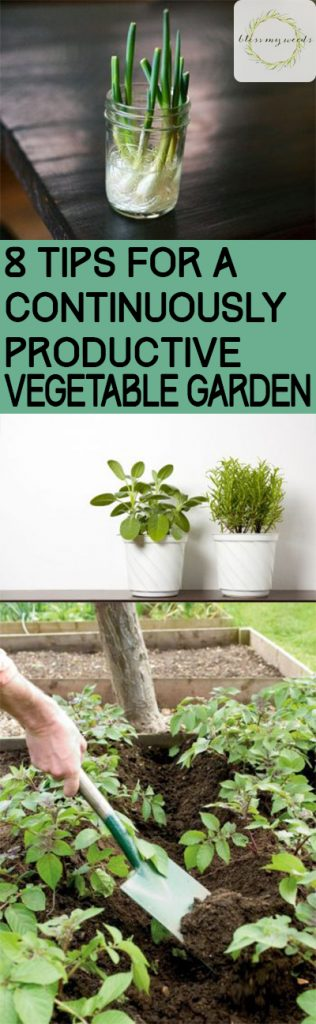 8 Tips for a Continuously Productive Vegetable Garden - Vegetable Garden, Vegetable Gardening, Vegetable Gardening Tips and Tricks, How to Grow a High Yield Vegetable Garden, Gardening Hacks, Gardening Tips and Tricks, Popular Pin