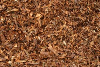 """How to Get Rid of That """"Plant Rot"""" Smell in Your Garbage Can - Clean Your Garbage Can, How to Clean Your Garbage Can, Get Rid of Plant Rot Smell, How to Get Rid of the Rotting Plant Smell In Your Trashcan, Trashcan Hacks, Cleaning, Outdoor Cleaning Tips and Tricks, Popular Pin"""